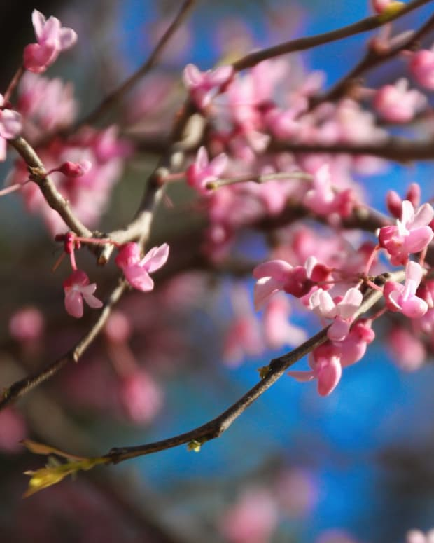 spring-in-poetry-when-spring-finally-arrives-here-a-poem