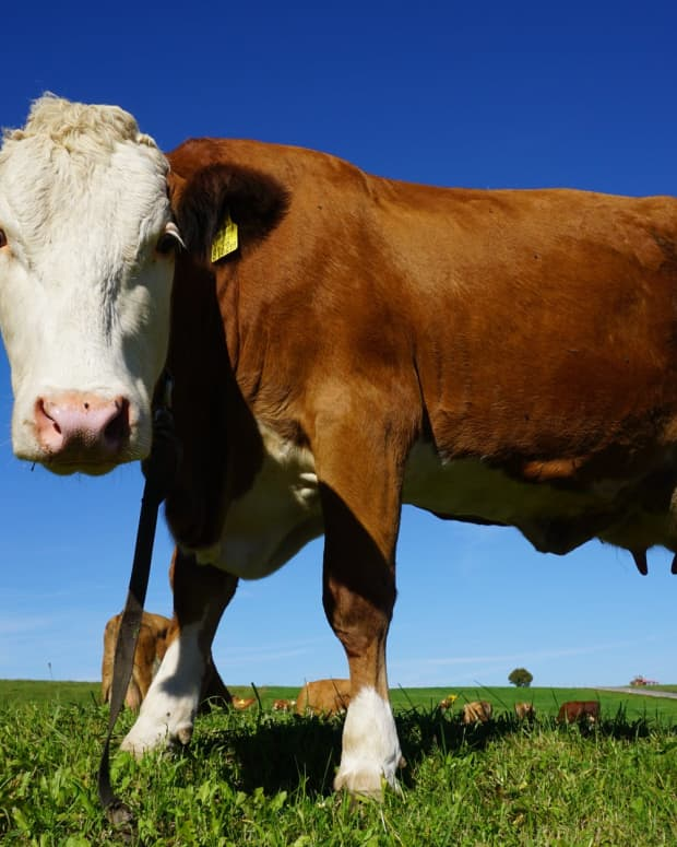 you-can-change-what-you-want-but-leave-my-milk-cow-alone