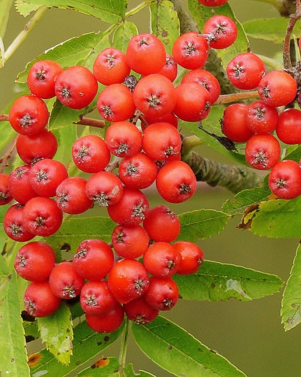 traditional-british-folk-songs-involving-trees