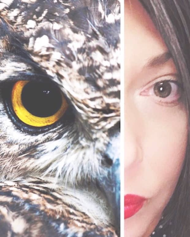 the-phase-of-fade-the-careless-fox-and-the-wisdom-of-the-owls