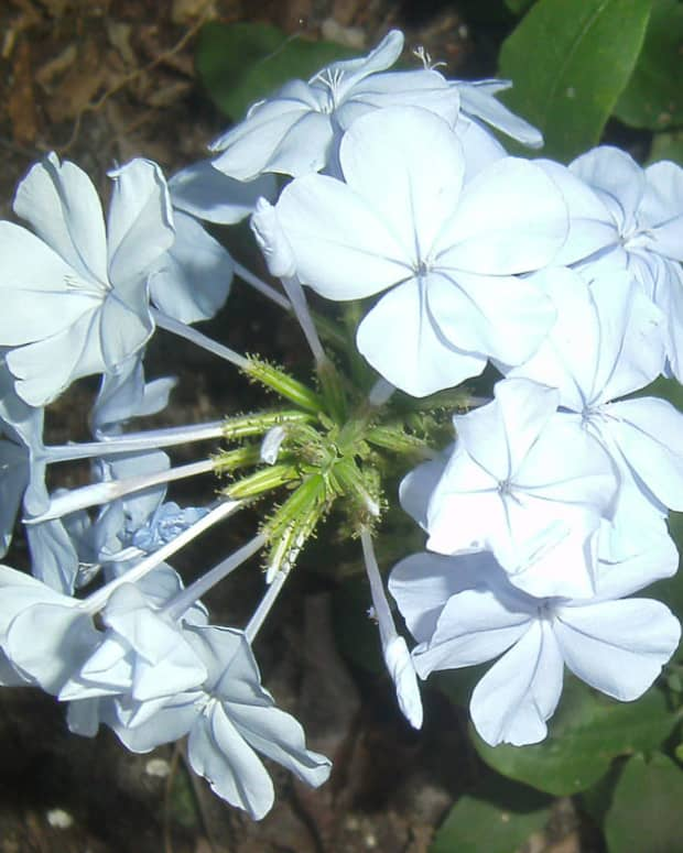 the-flowers-of-summer