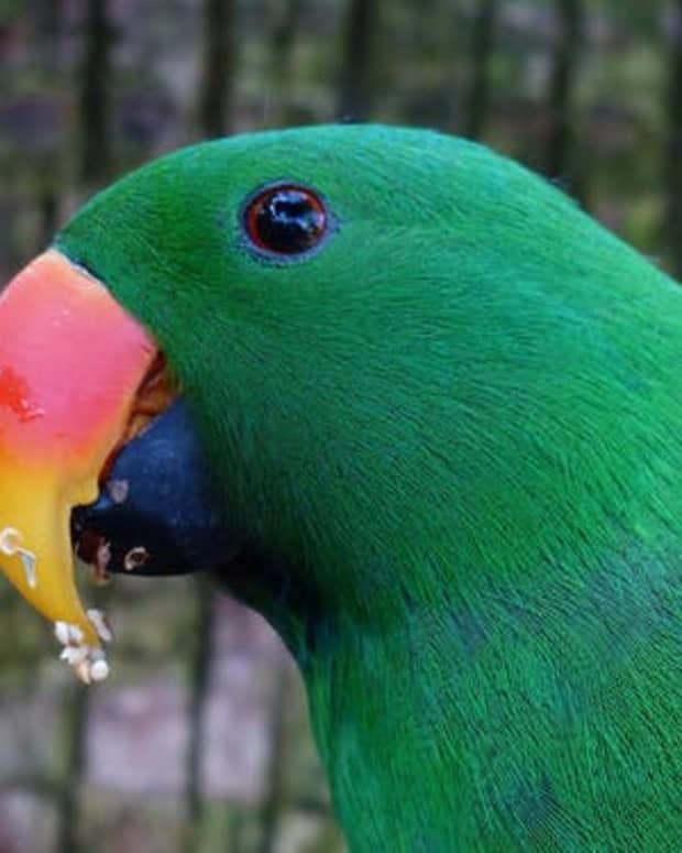 the-green-parrot-poem