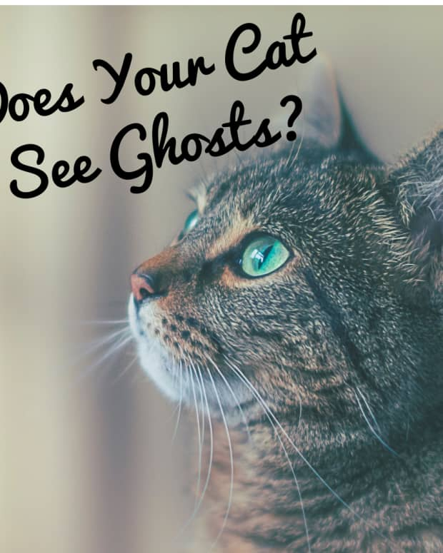 do-cats-see-ghosts-why-your-cat-can-see-spirits