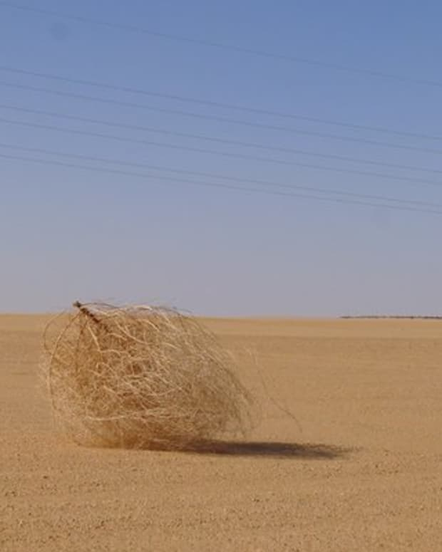 the-true-importance-of-tumbleweeds