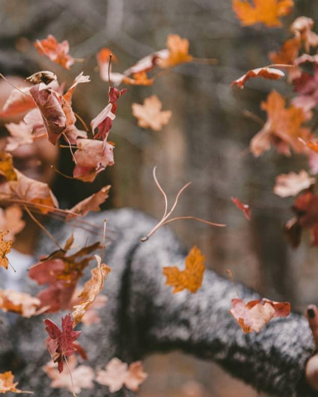 strolling-through-autumn-leaves