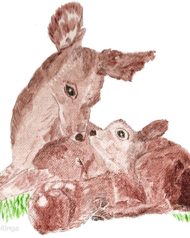 poem-for-a-little-deer