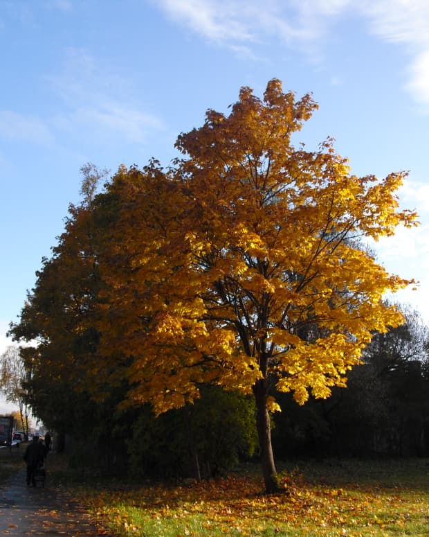 autumn-dance