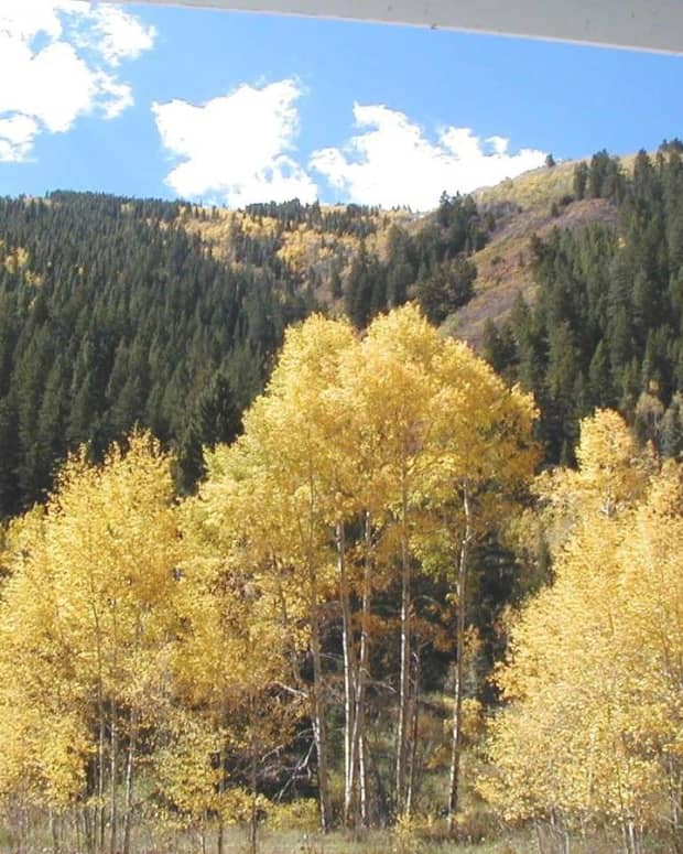 yellow-seasons
