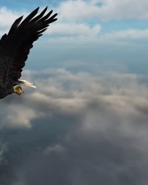 an-eagle-in-the-sky