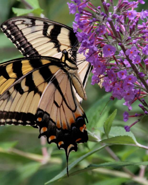 insects-in-poetry-rise-like-butterflies-a-poem-for-today