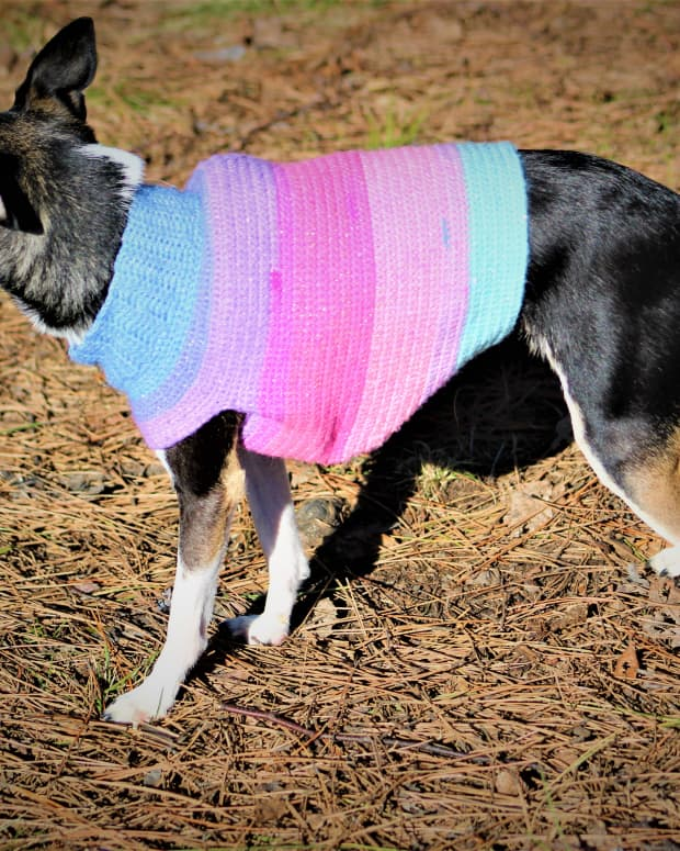 sparkle-cake-dog-sweater