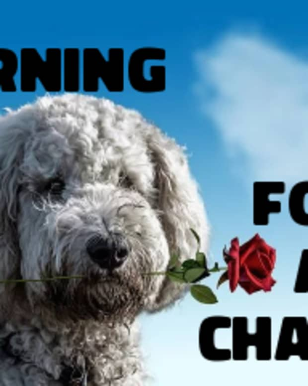 poem-yearning-for-a-chance