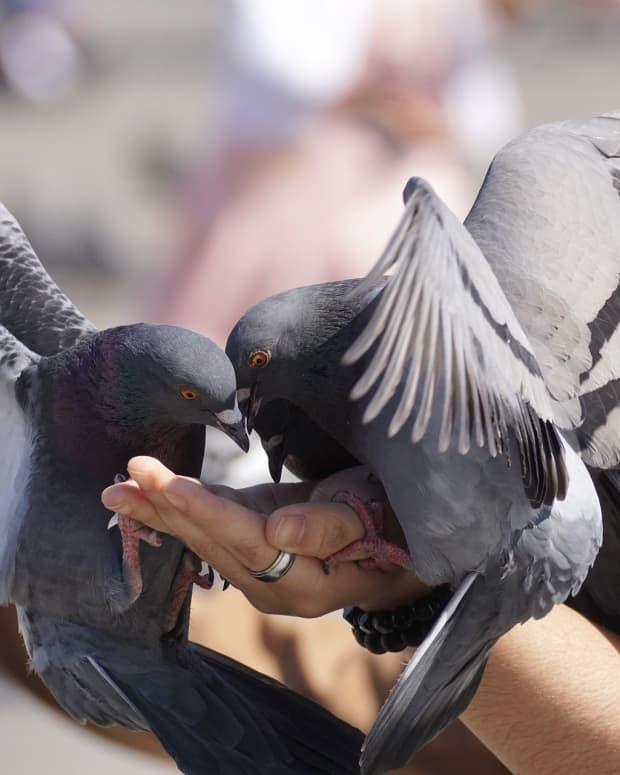 i-still-feed-the-birds