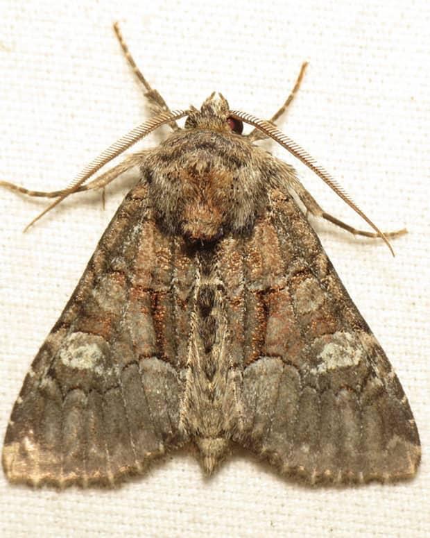 ways-to-make-a-moth-a-poem