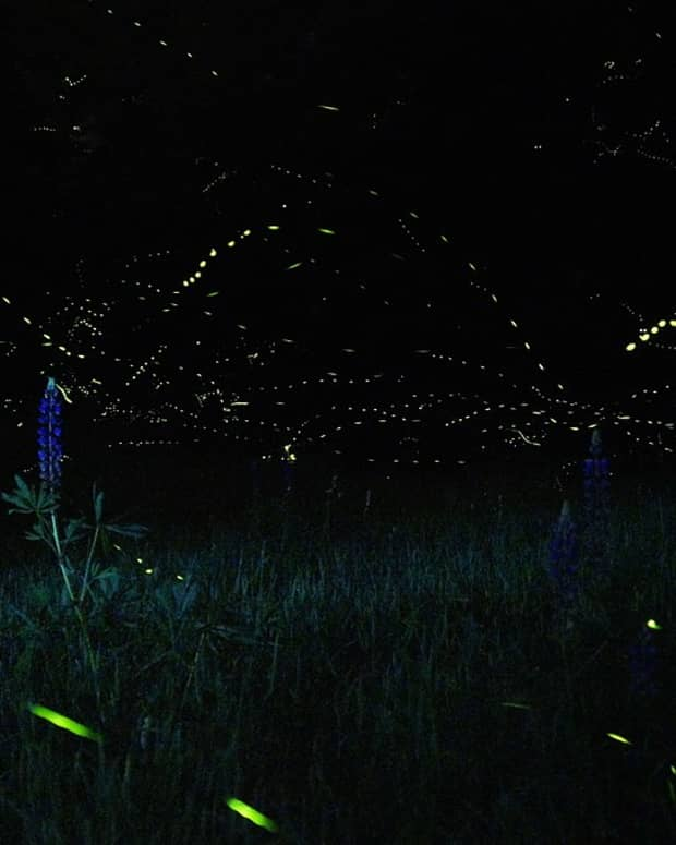 at-war-with-the-fireflies-a-poem