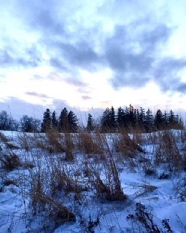 winterwill
