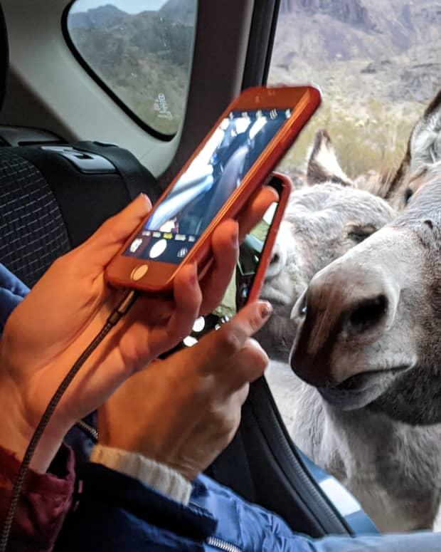 oatman-arizona-and-its-free-roaming-burros
