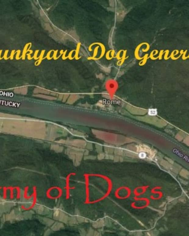 a-junkyard-dog-general-the-army-of-dogs-toe-and-her