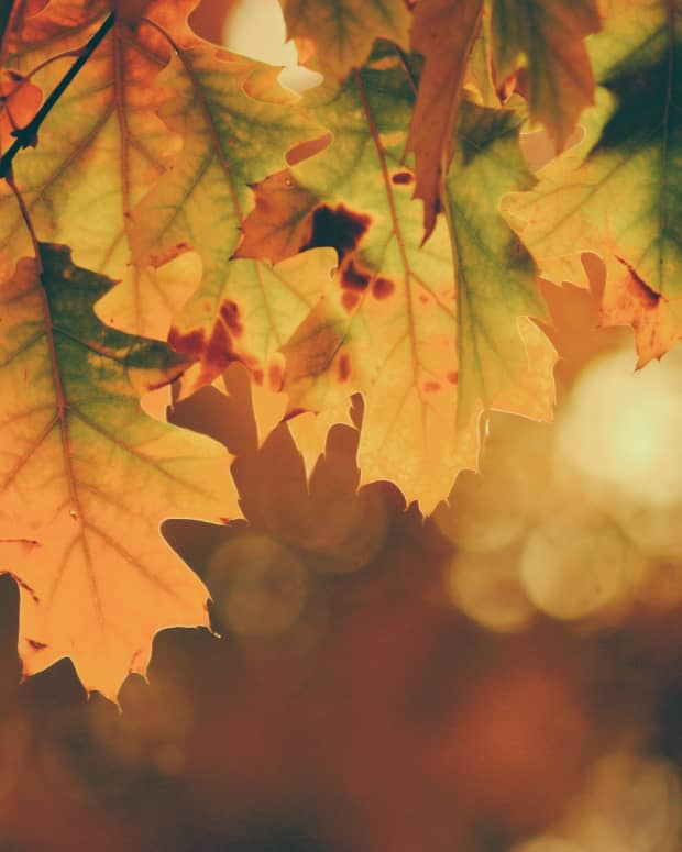 autumn-is-here