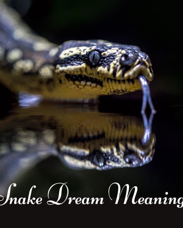 snake-in-the-dream