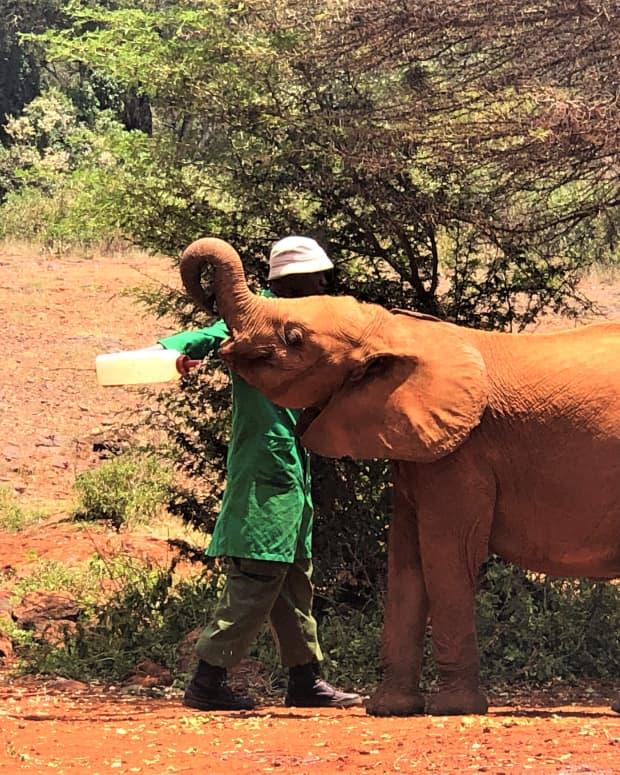 elephant-orphanage-nairobi