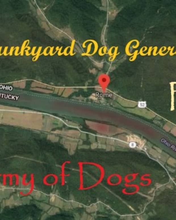 a-junkyard-dog-general-the-army-of-dogs-part-three