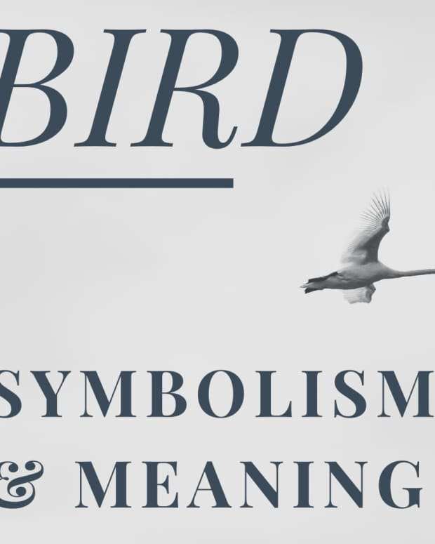 divine-birds