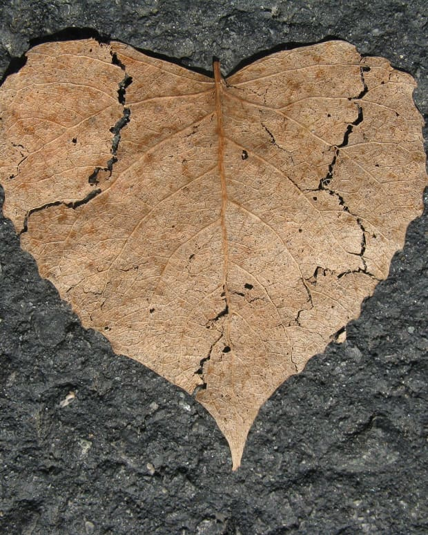 the-crying-heart