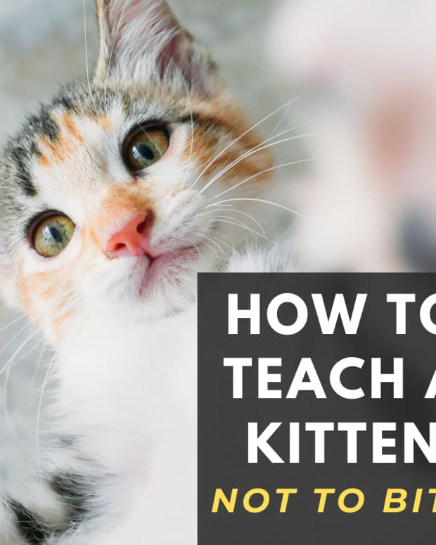 why-does-my-kitten-bite-me