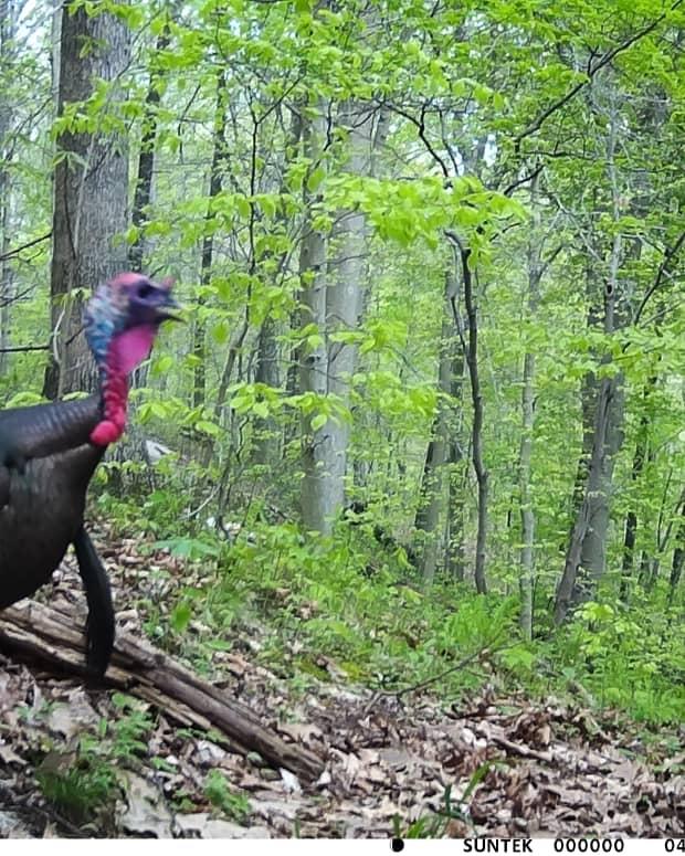 backyard-wildlife-viewing-a-trial-camera-comparison