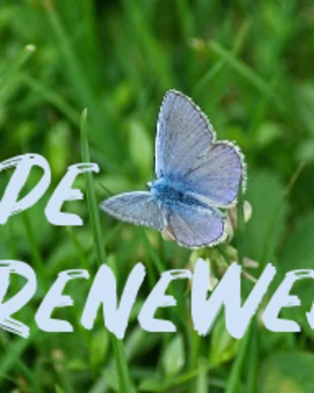 poem-hope-renewed