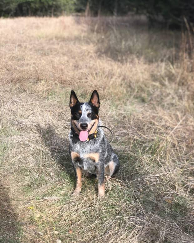 my-dog-is-my-best-therapist