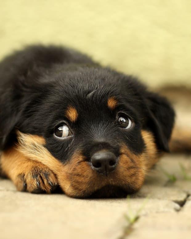 the-depressed-dog