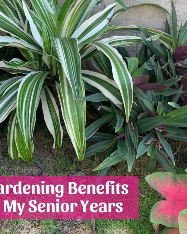 gardening-benefits-in-my-senior-years