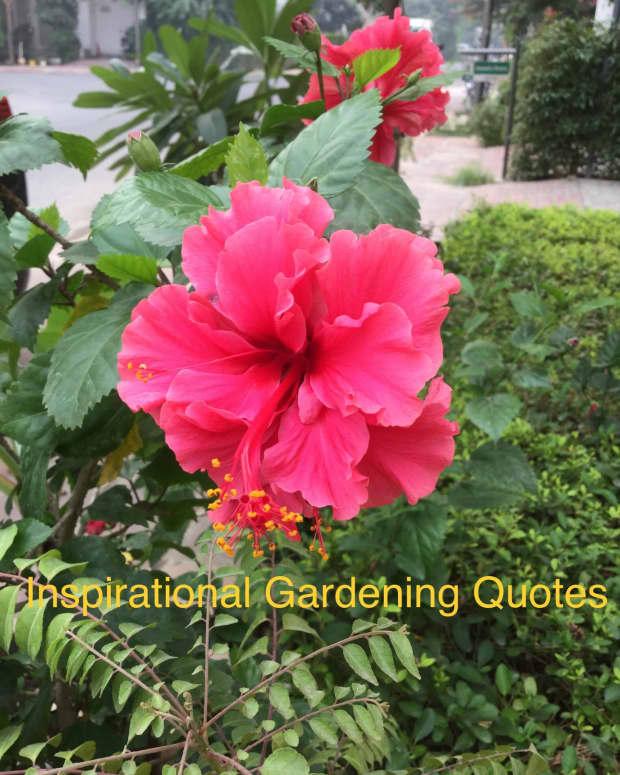 20-interesting-and-inspiring-gardening-quotes