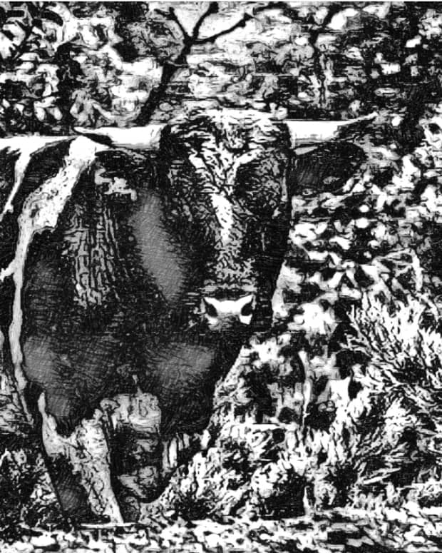 the-magic-cow-part-3-a-short-story