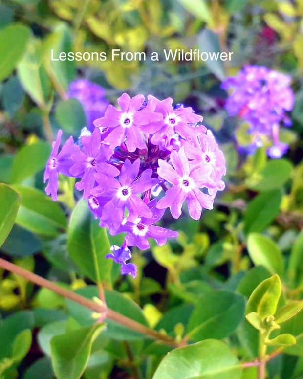 lessons-from-the-wildflowerpoem