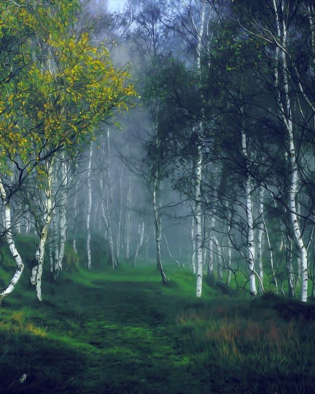 birch-tree