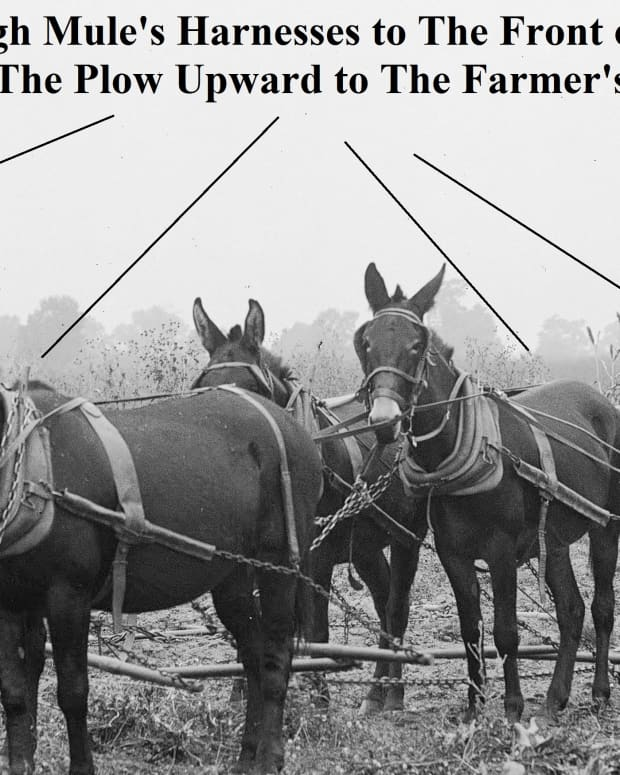callused-hands-and-plow-lines-helped-build-a-proud-south-land