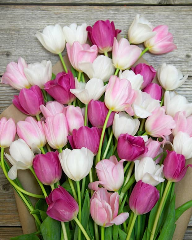 the-bouquet-of-tulips