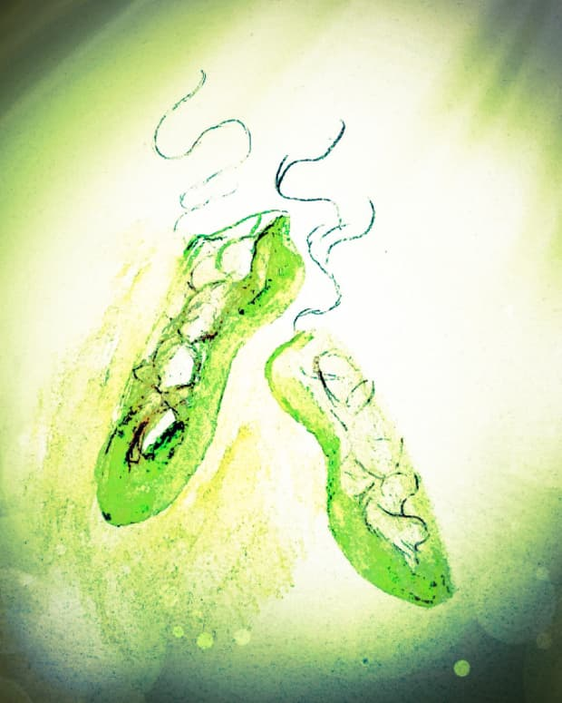 the-green-shoes
