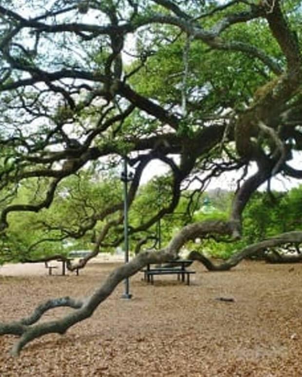 elizabeth-baldwin-park-in-houston-is-incredible