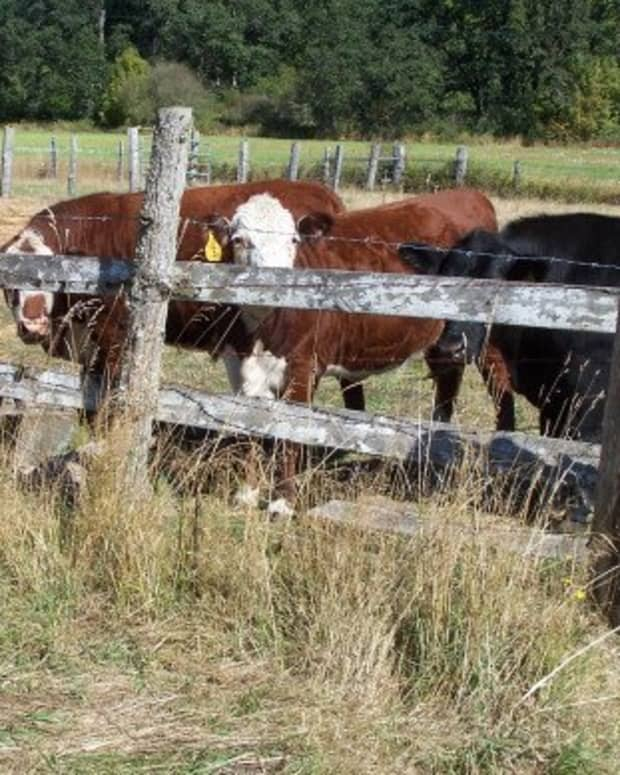 holy-cow-billybuc-photo-challengeprompt-installment-3