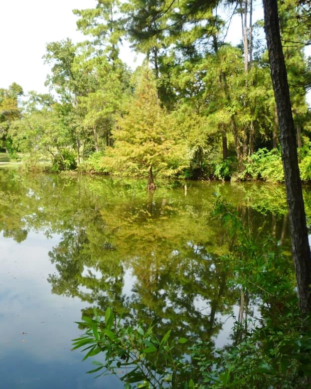 meyer-park-of-spring-texas-natural-beauty-in-abundance