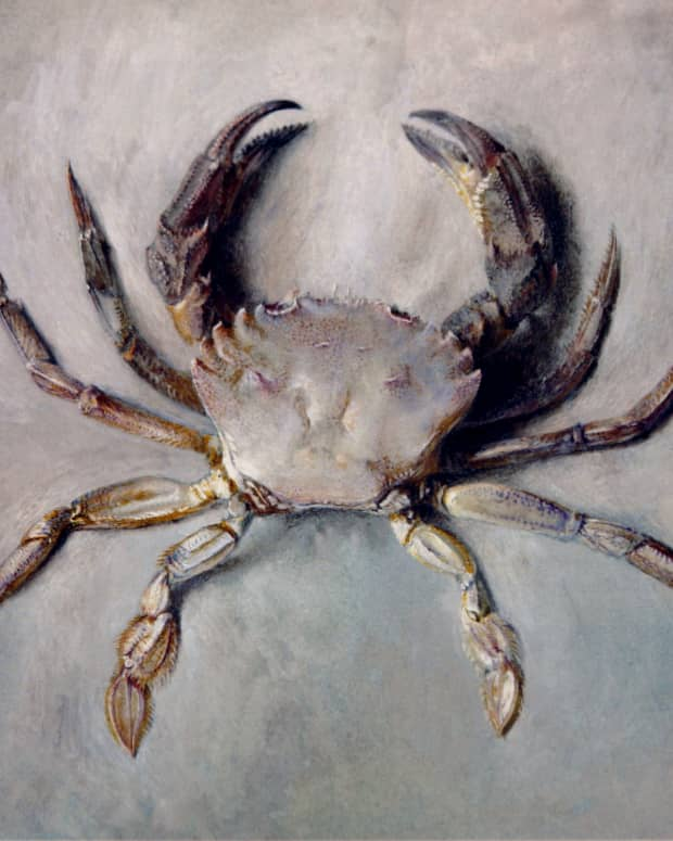 the-story-of-the-brave-crab