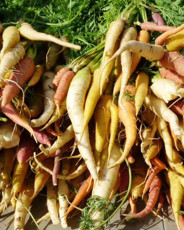visiting-the-eastside-farmers-market-in-houston