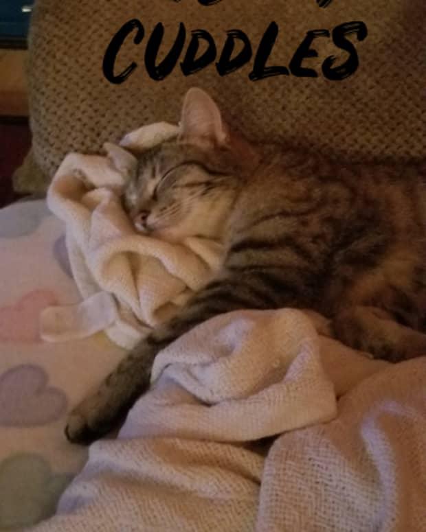 poem-fur-baby-cuddles