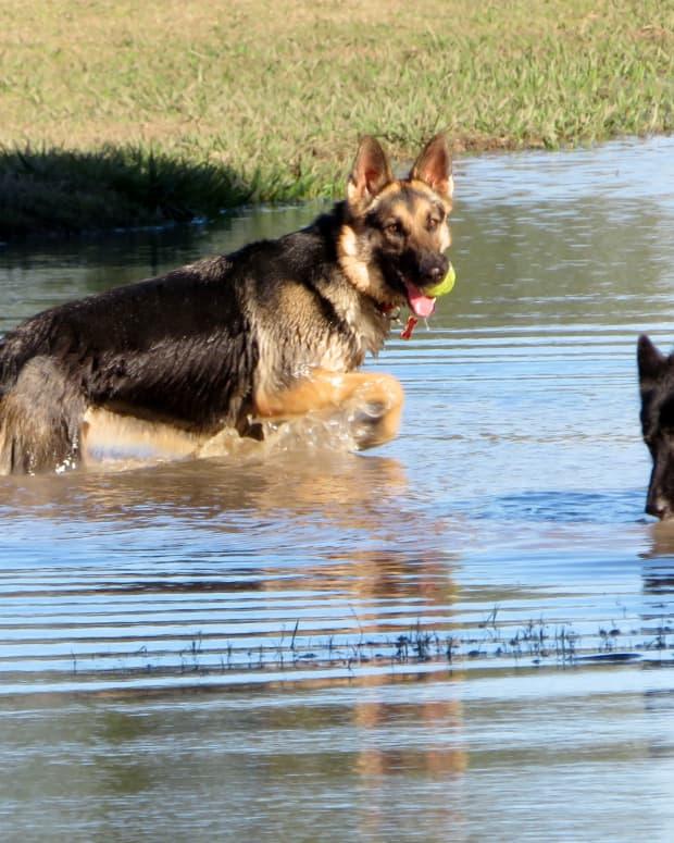 congressman-bill-archer-park-houston-dog-park-heaven