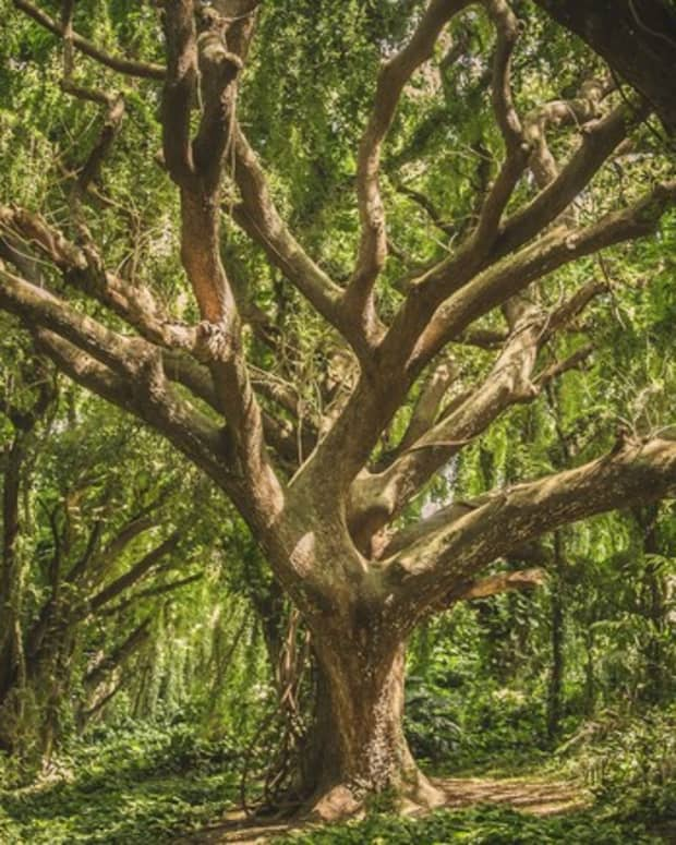 the-tree-a-short-story