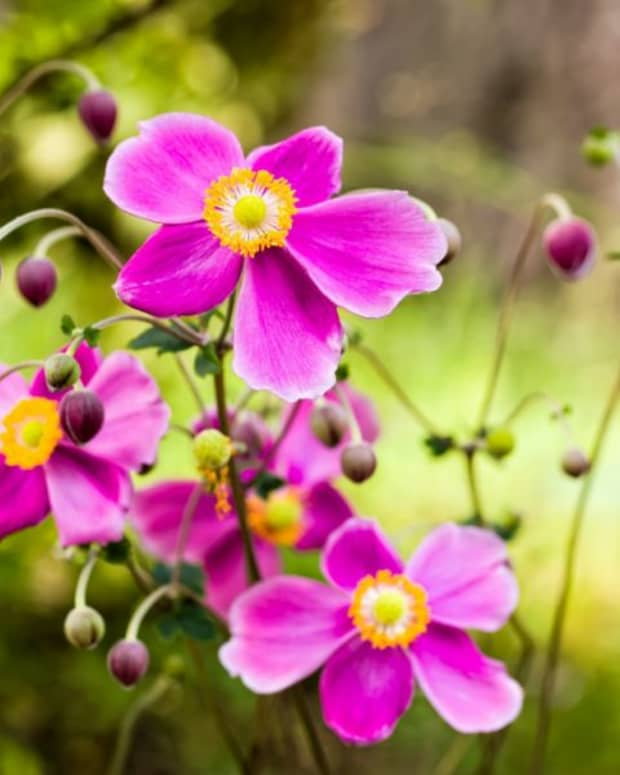 colorful-autumn-blooming-flowers-to-plant